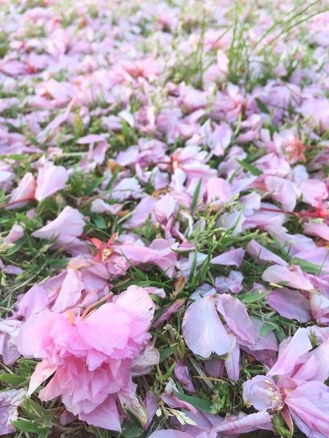 鶴岡公園 2017 春3