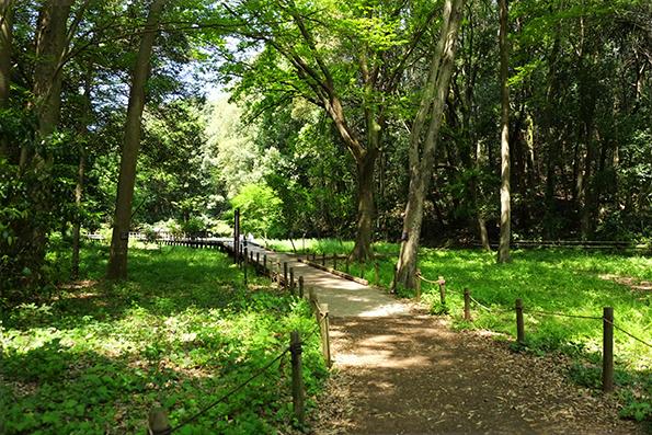 東高根森林公園01