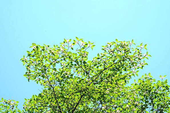 東高根森林公園03