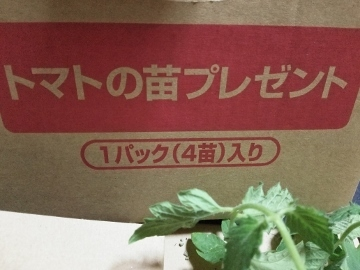 トマトの苗 2017-05-27