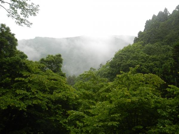 鍋割山・塔ノ岳 009