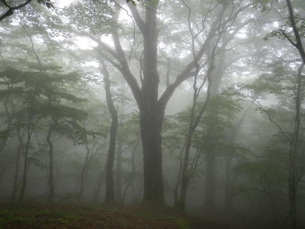 鍋割山・塔ノ岳 074