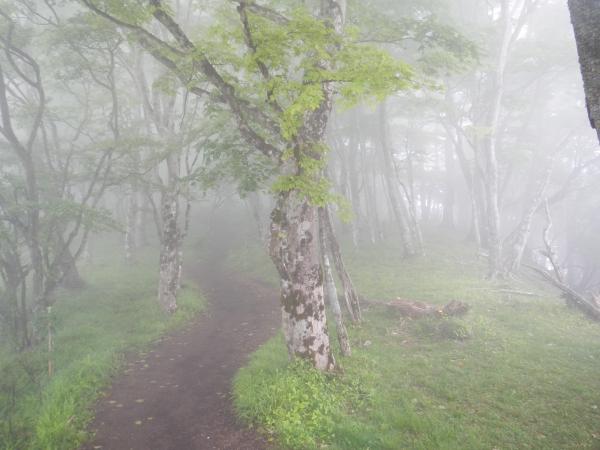 鍋割山・塔ノ岳 042