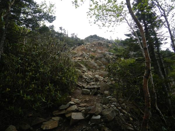 甲武信ヶ岳 058