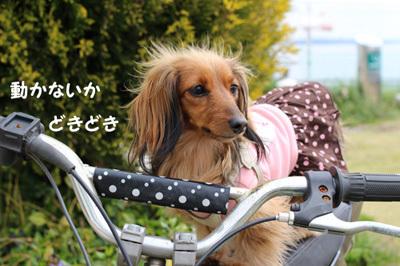 03-24-hamanako-4.jpg