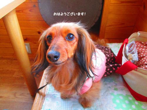 03-24-hamanako51.jpg