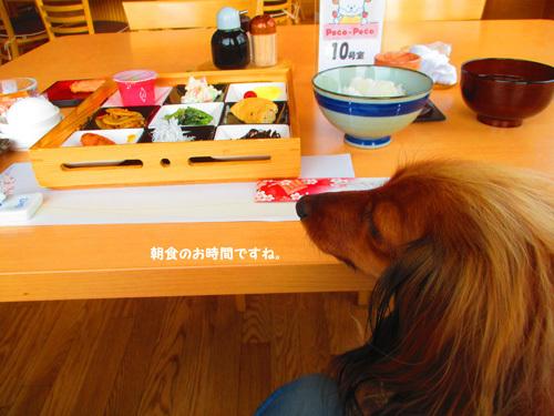 03-24-hamanako52.jpg