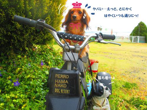 03-24-hamanako57.jpg