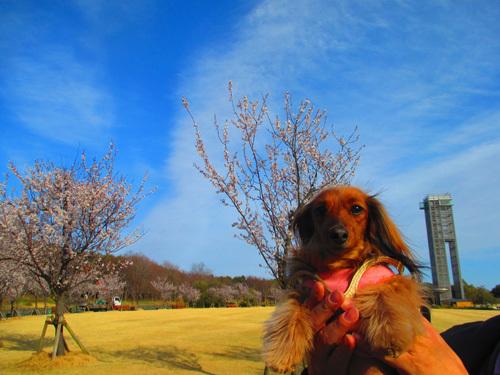 03-24-hamanako8.jpg
