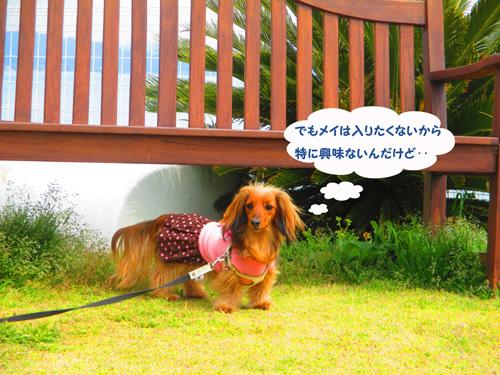03-25-hamanako81.jpg