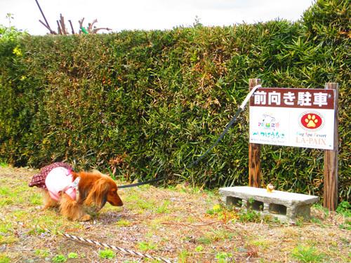 03-25-hamanako84.jpg
