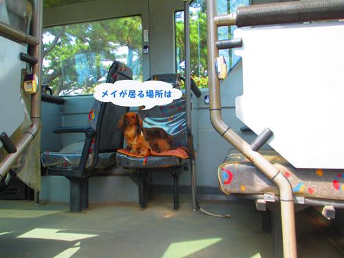 sakura-park11.jpg