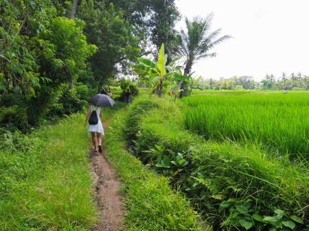 田んぼの畦道