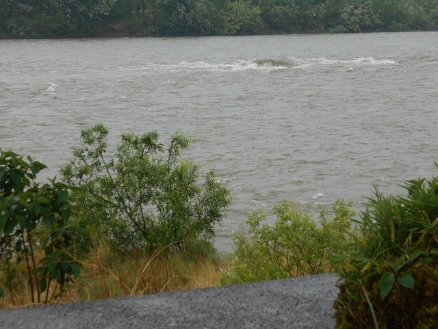 DSCN24310513今朝は大渡橋上流の大岩が見えないほど増水濁りです.jpg