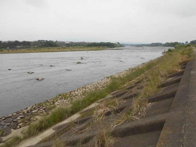大渡橋左岸上流DSCN25430607.jpg