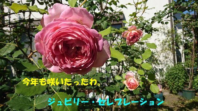 DSC_0573_20170607231425242.jpg