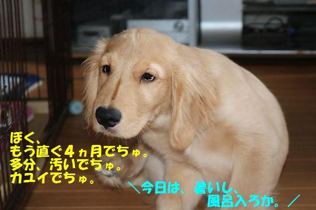 IMG_0093_2017061023164687f.jpg