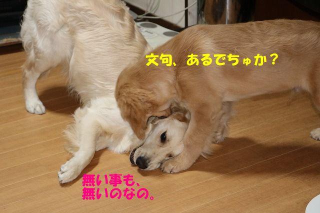 IMG_0395.jpg