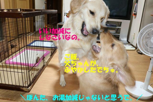 IMG_0401_20170614234318b81.jpg