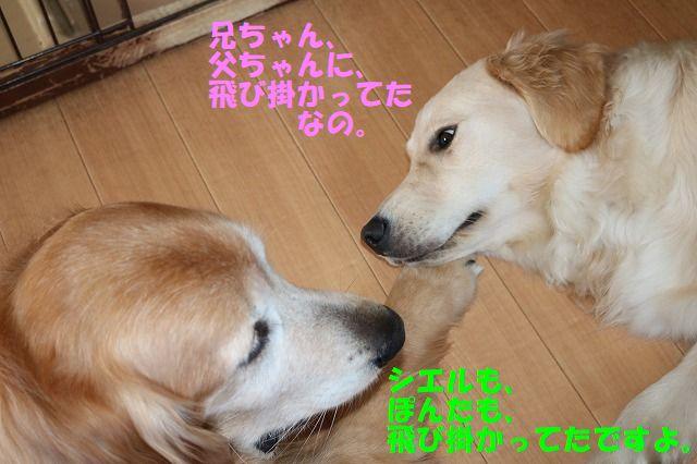 IMG_0428.jpg