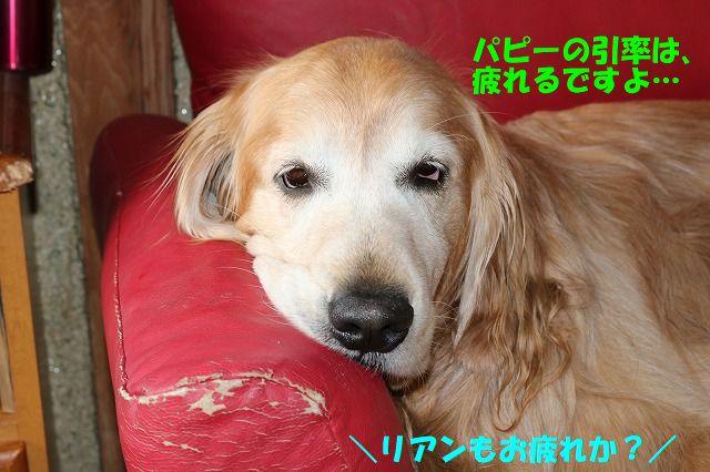 IMG_0523_20170618234820323.jpg