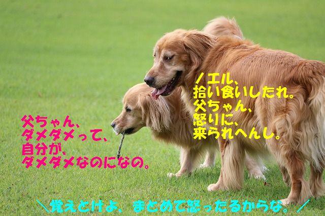 IMG_0828a.jpg
