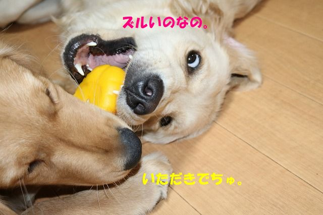 IMG_0913_20170627234027b60.jpg
