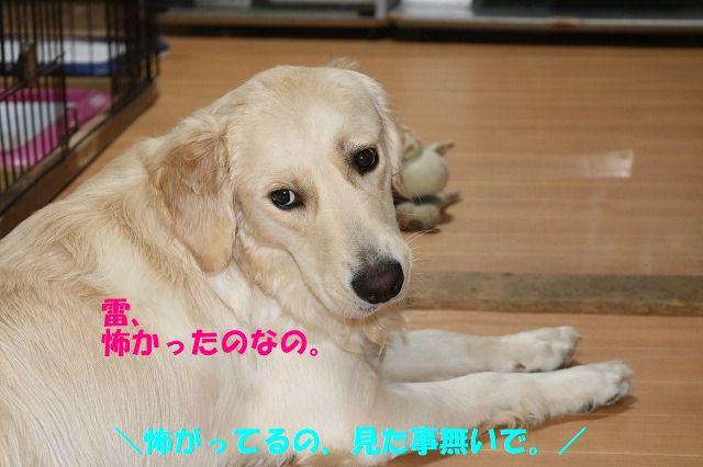IMG_1091_201706302353150dc.jpg