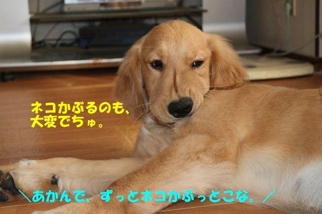 IMG_1182.jpg