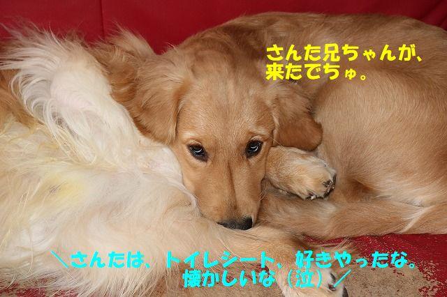 IMG_1316.jpg