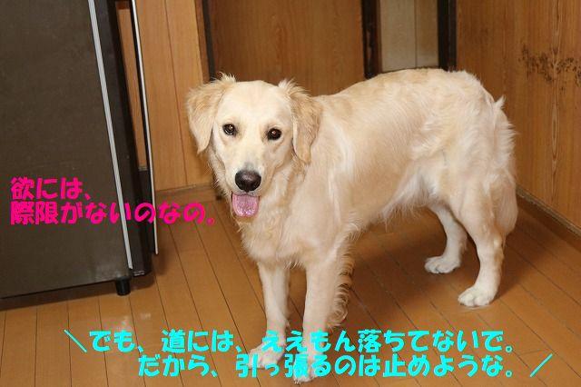 IMG_1341_201707072355381ed.jpg