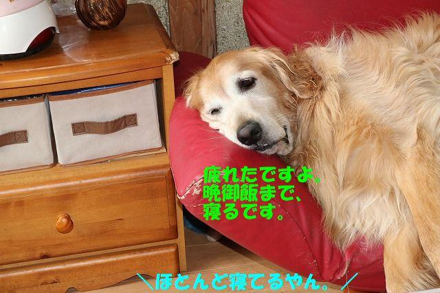 IMG_1425_201707092103460e7.jpg