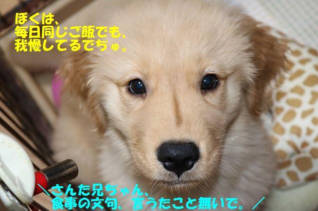 IMG_7680_2017050122102997f.jpg