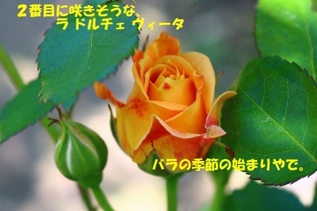 IMG_7913.jpg