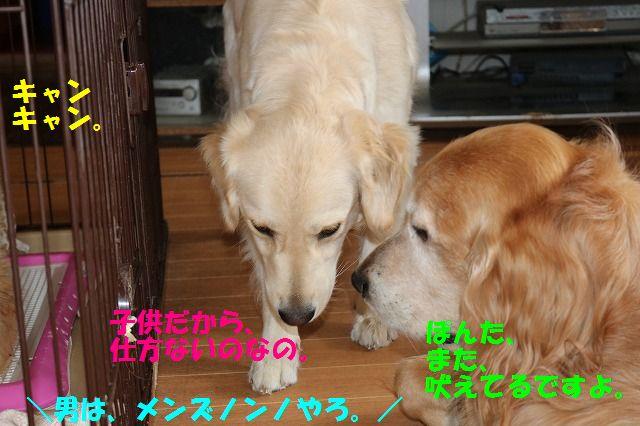 IMG_7945_20170505201503035.jpg