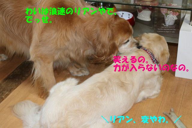 IMG_8266_20170510222636e1e.jpg