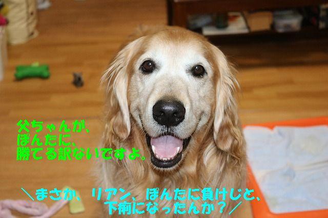 IMG_8359_20170512235040cfb.jpg