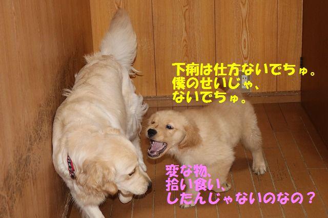 IMG_8367_201705131611381ee.jpg