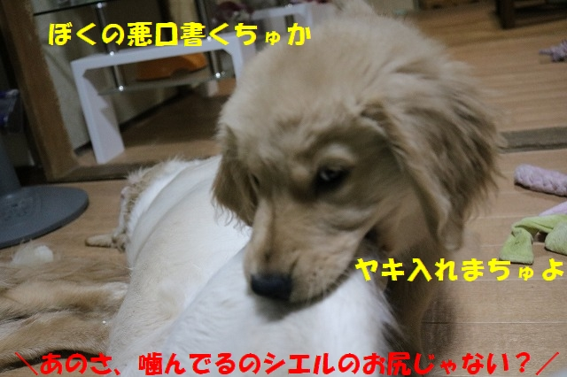IMG_8442_20170515190044556.jpg