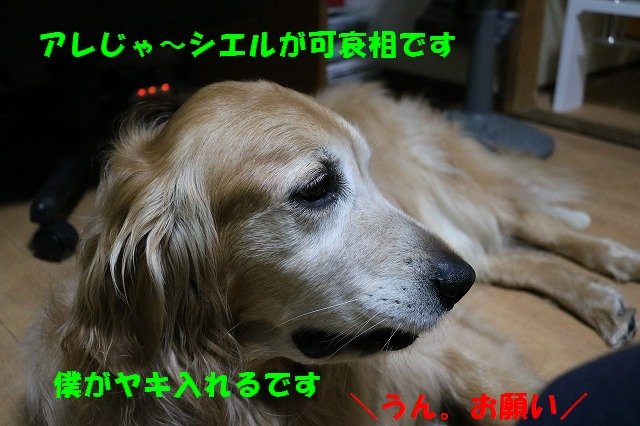 IMG_8454_20170515190047fcb.jpg