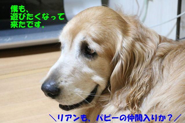 IMG_8512_201705161948023c6.jpg
