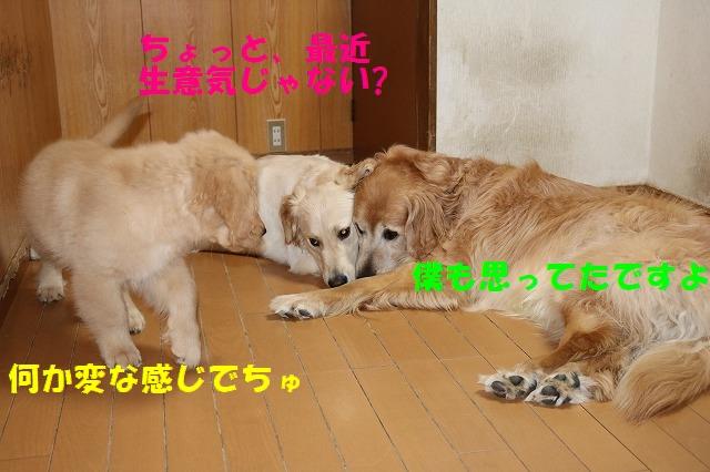 IMG_8597_201705151900555d3.jpg
