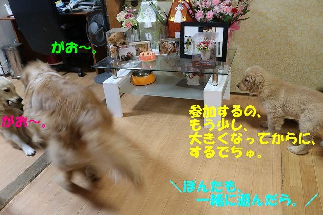 IMG_8603.jpg
