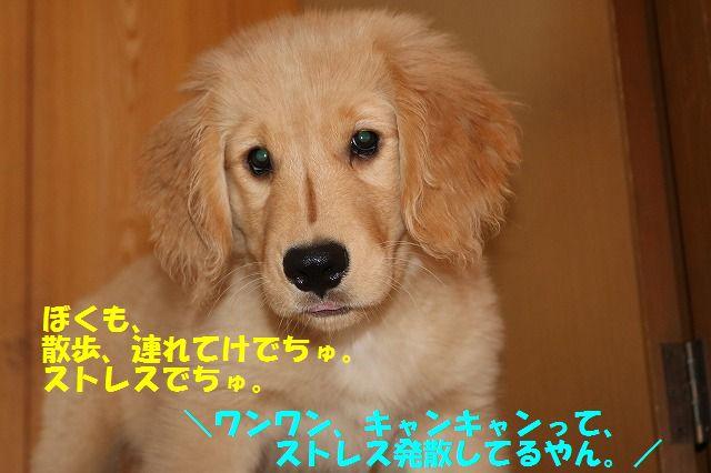 IMG_8634.jpg