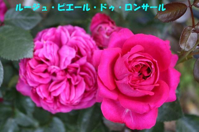 IMG_8738.jpg
