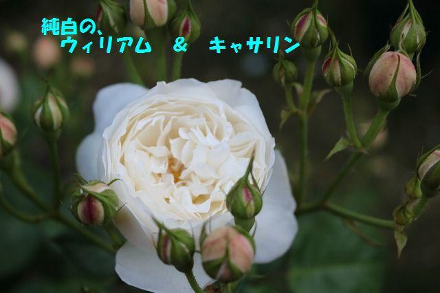 IMG_8740.jpg