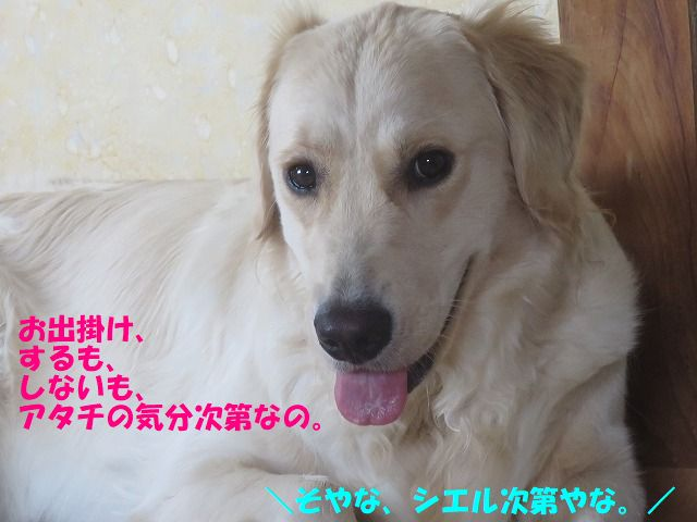 IMG_8740_20170701210940103.jpg