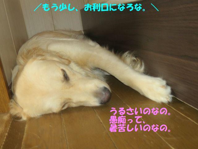 IMG_8787_20170703234406e2f.jpg