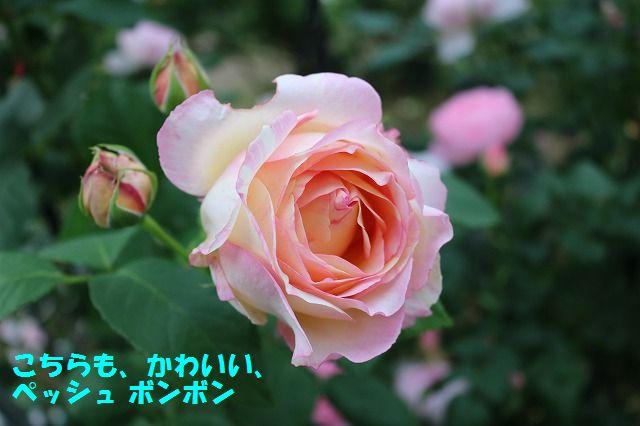 IMG_8996_20170521231542b1b.jpg
