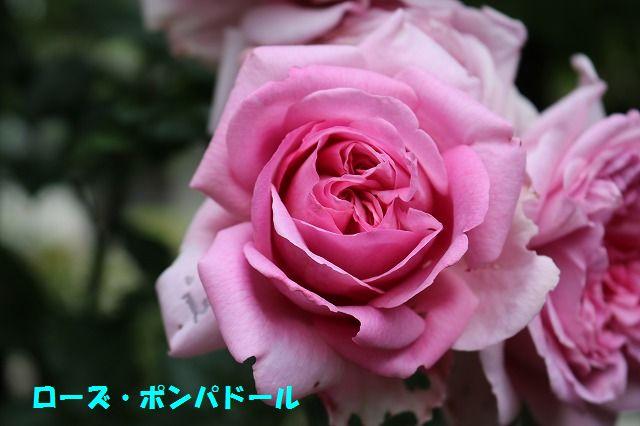 IMG_9099_20170523221012b41.jpg